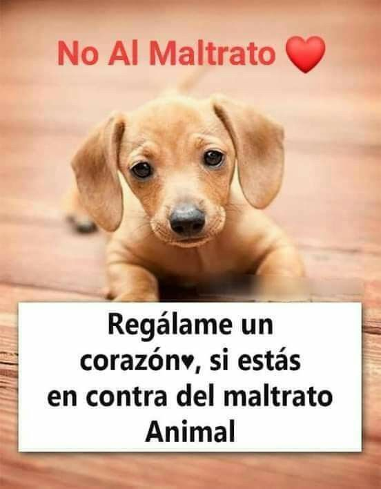 Pin De Alfredo Flores Escalante En Animales Adopcion Memes De Animales Mascotas