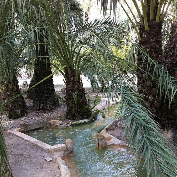 Acequias en un huerto de palmeras #palmeral de Elche #Patrimonio Humanidad #Elche #Visitelche #palmeral  #palmeras