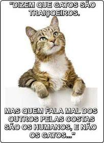 Petits Gatos Falando A Verdade Frases Sobre Animais