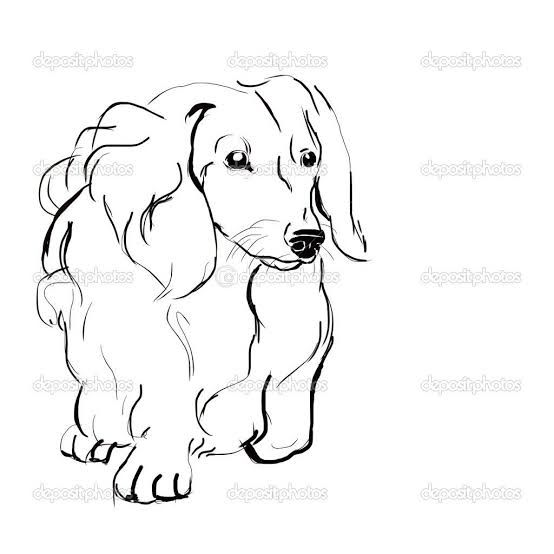 Image Result For Long Haired Dachshund Drawing Dachshund Drawing