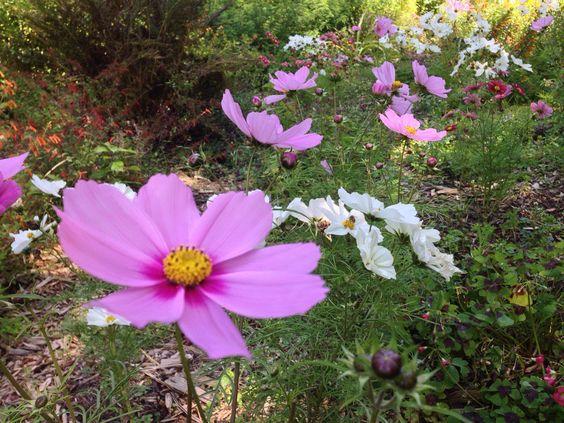 SF Botanical Garden (@SFBGS) | Twitter