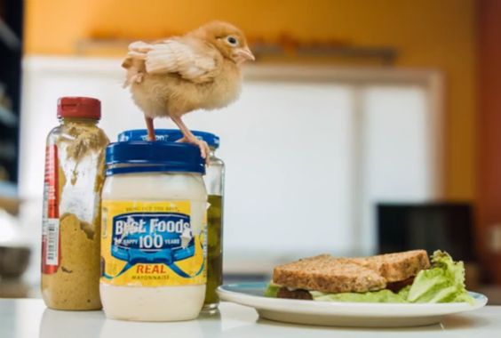WATCH: Campaign Tells Major Mayo Producers to Stop Killing Baby Birds