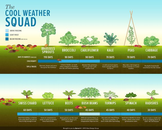 What crops grow well in the Fall?  Here's a quick reference #infographic.