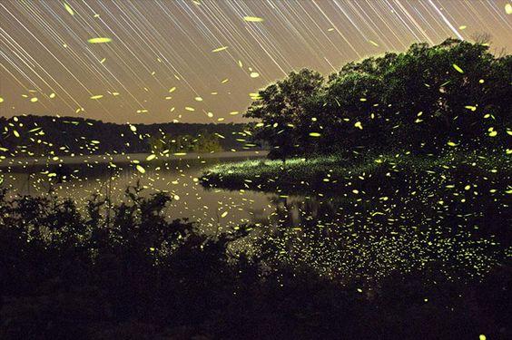 Vincent Brady Fireflies