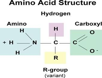 proteins amino acid structure monomers of proteins