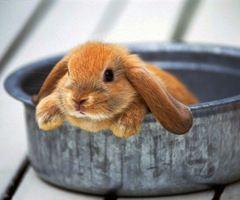 naww bunny! <3