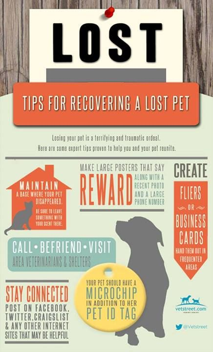 Tips for Recovering a Lost Pet #findingalostpt #recoveringalostpet