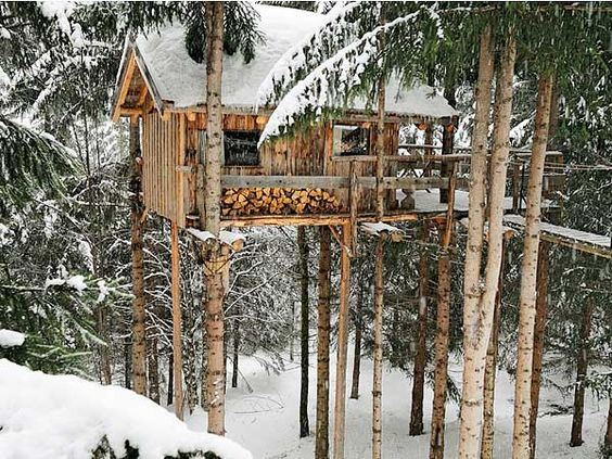 The dream child of Patrick and his two son, Hugo Charly journeyman carpenter and guitarist, has materialized in shacks perched ten meters high, anchored to the slender trunks of spruce.