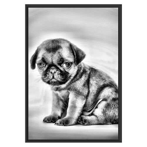 Little Pug Puppy Framed Art Print East Urban Home Size 100 Cm H X