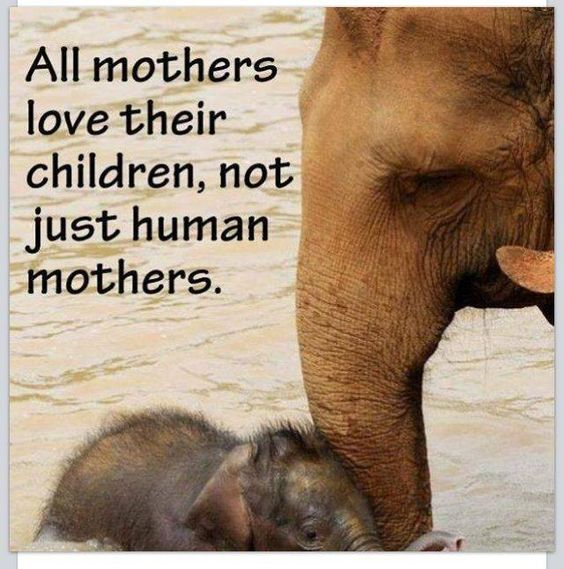 All mothers love their children...: