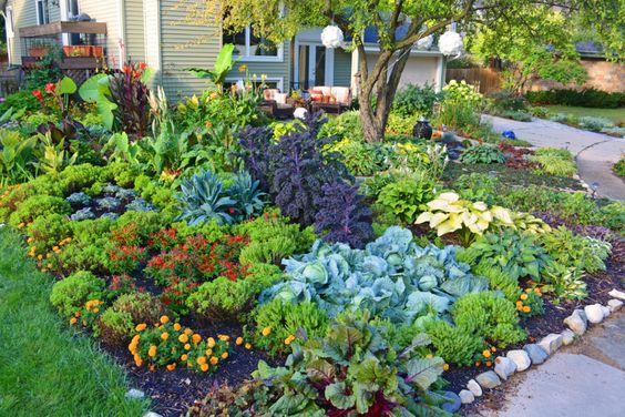 Edible Landscaping: Front Lawn Vegetable Garden | jardin potager | bauerngarten | köksträdgård (How To Design by Shawna Coronado):