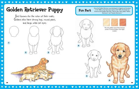 step by step drawing Puppies | Go Back > Pix For > How To ...