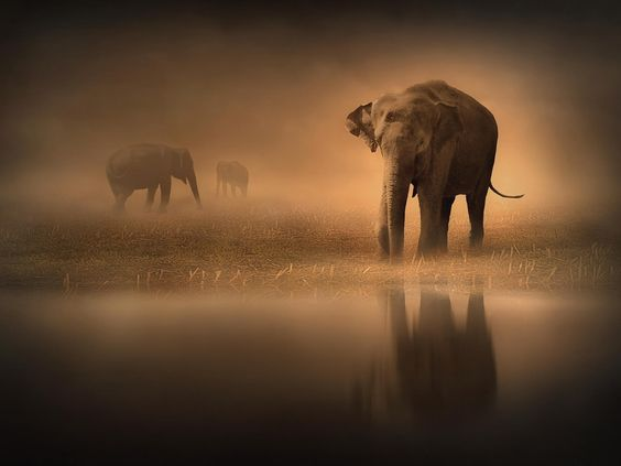 Elephants in the Mist by Jenny Woodward on 500px
