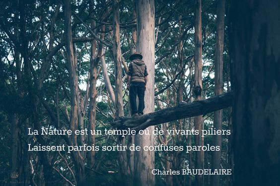 Baudelaire quote by Bérénice Banhart on 500px Follow me on facebook : https://www.facebook.com/pages/B-Banhart/122213161232424 #citation #poem #french  #poême #boheme #forest #nature