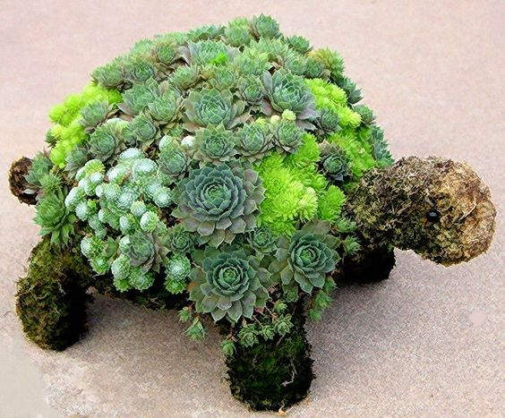 Succulent turtle topiary. My daughter would love this.