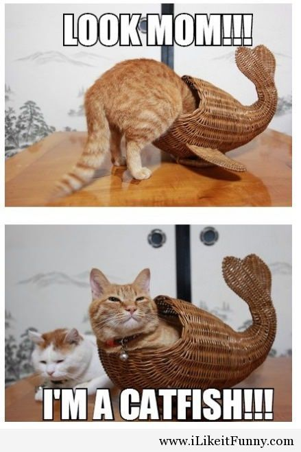funny cats catfish and funny cat pictures on pinterest