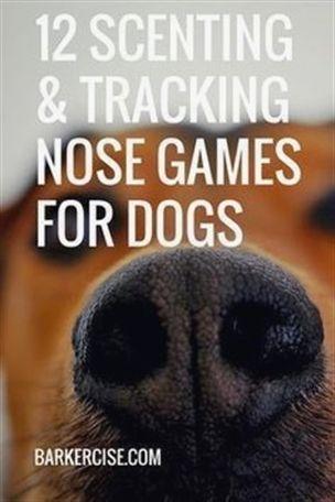 Dog Training Leads Dog Training Yuma Az Dog Training 77058 Dog