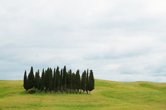 Cluster of cypress trees in Tuscany (via Flickr)