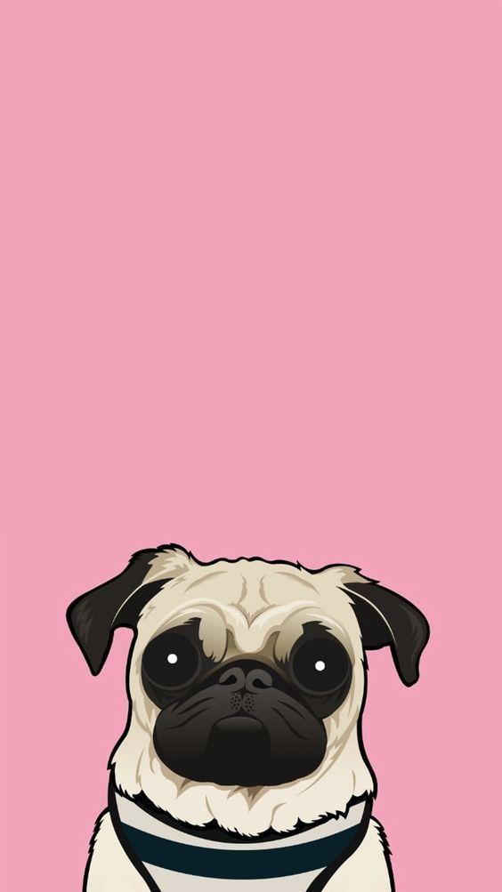Pin By Heemali Kataria On Wallpapers In 2020 Pug Wallpaper Dog