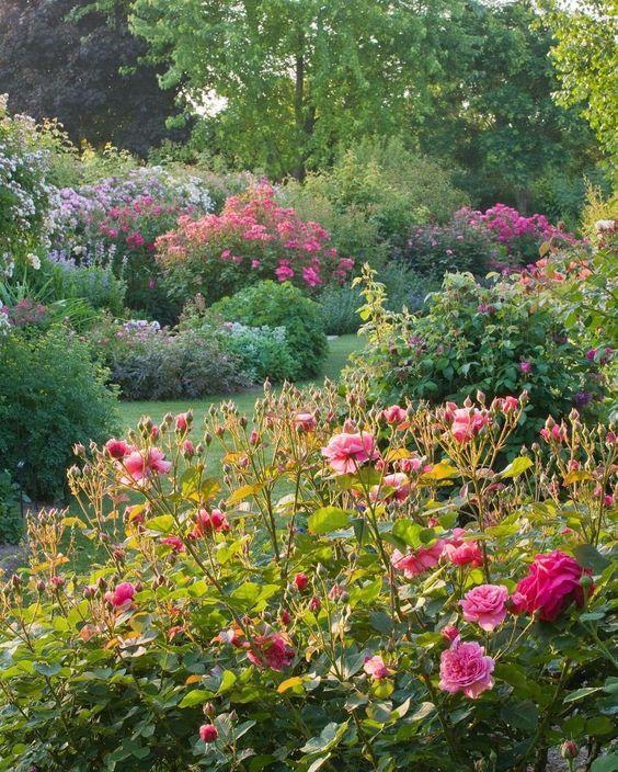 garten und landschaftsbau zweibrücken sammlung pic oder deffcbfcceefaeae rose nursery morning light