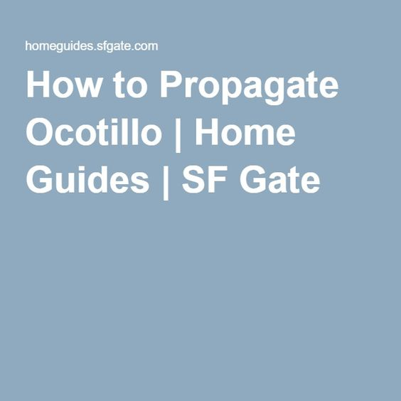 How to Propagate Ocotillo | Home Guides | SF Gate