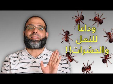 لأول مرة رقية طرد النمل والحشرات من المنزل د شهاب الدين أبو زهو Youtube Ali Quotes Islamic Quotes Quotes