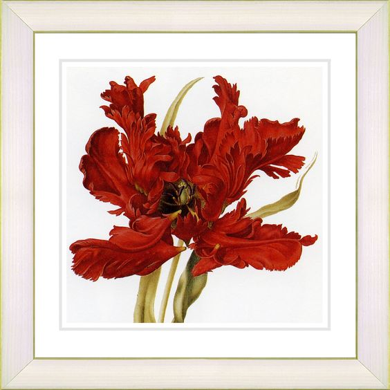 Vintage Botanical No. 21W by Zhee Singer Framed Painting Print