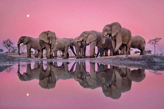 Elephants      |   #perspicacityparty