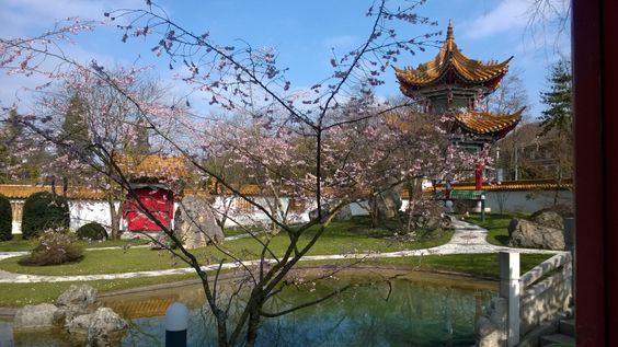 chinagarten24