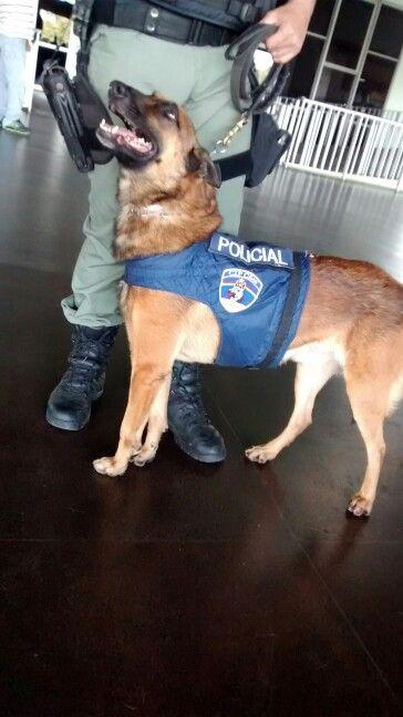 Otho da Polícia Militar na Rodoviária de Recife/PE.