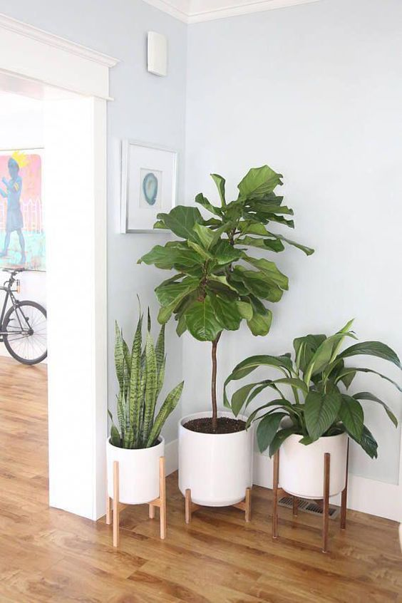 The Potted Earth®️️ Large mid-century modern style planter with wood stand is perfect for any indoor space. We design and build our wood products, one-by-one, using the highest grade American hardwood. Each Large set features: Ceramic Cylinder: 12 internal diameter, 12.75 external diameter x 12 height Ceramic with stand: 21 height Wood Base: 13 internal diameter, 18 height Ceramic comes with a drainage hole Drainage filter Floor protecting foot pads Pottin #ModernHomeDecorLivingRoom