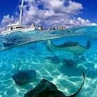 Grand Cayman:  I swam with the Stingrays.  The Warmest water I was ever in was here!