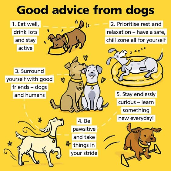 The Best Therapist Has Four Legs And A Wet Nose Take Some Advice From Our Dogs This Worldmentalhealthday And Rem Dog Advice Dog Quotes Really Cute Puppies