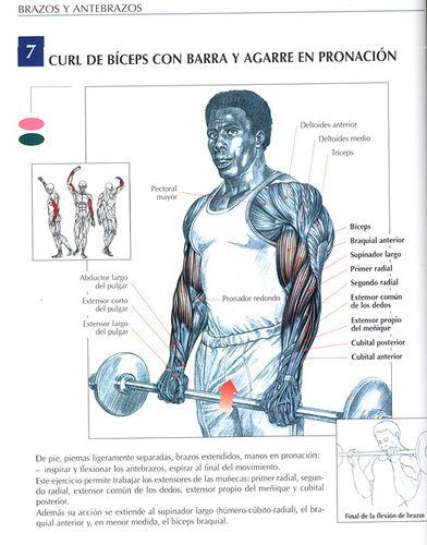Ejercicios Biceps: Curl de bíceps con barra y agarre en pronación by raul391970, via Flickr: Cheat Curls, Lunes Biceps, Fitness Health, Bicep Workouts For Mass, Best Bicep Workout, Biceps Pecho, Ejercicios Biceps, Arm Workouts