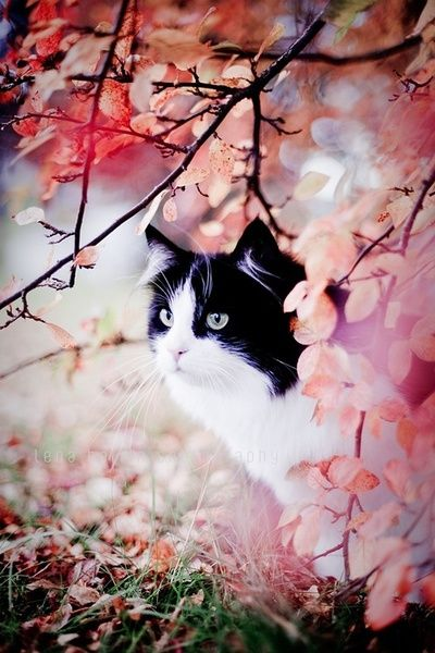 Beautiful cat in pink blossoms