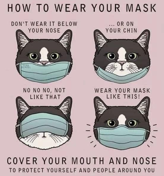 Pin By Wendy Lee On Memes That Keep Us Laughing Crying In Dark Times Cat Illustration Cat Face Mask Cat Mask