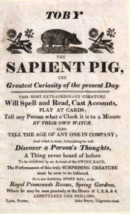 Advert for the Learned Pig, early 19th century (PInterest)