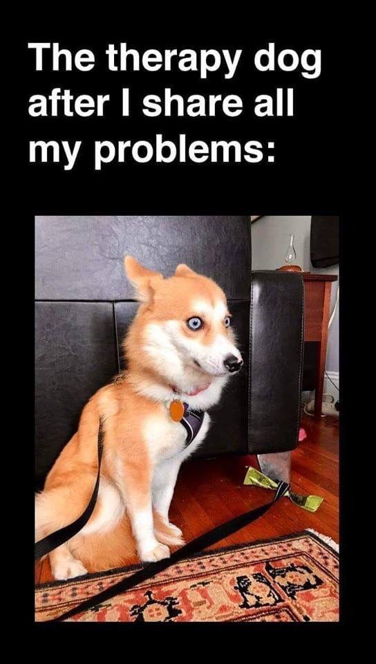 Internal Screaming Funny Dog Memes Funny Animal Memes Funny