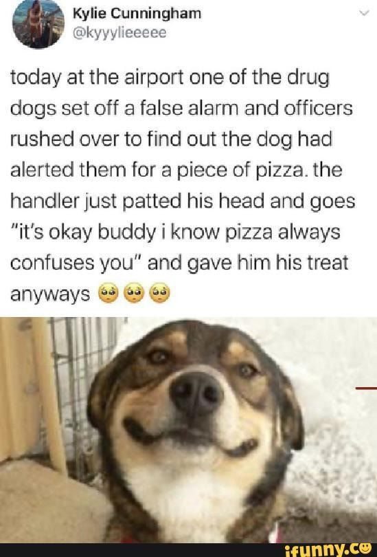 Tap To See The Meme Drug Dog Piece Of Pizza How To Find Out