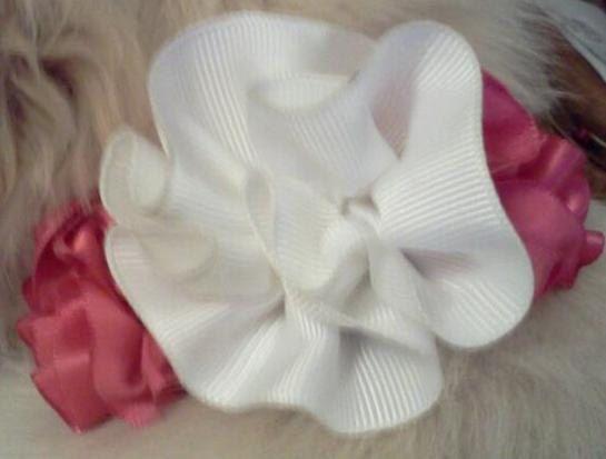 Flower Cutie Collars by Cutie-pa-too-tie Collars! Flower Cutie - Pink & White  www.CutiepatootieCollars.etsy.com