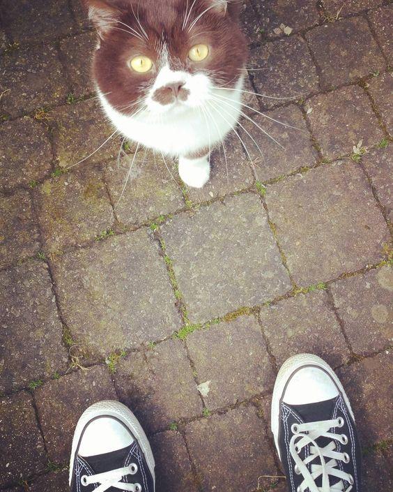 #catsofinstagram #katzenliebe #propetsfeature #katzen #weeklyfluffy #kater #lebenmitkatzen #katzenliebhaber #catstagram #meow #petstagram #pets #petsagram #britishshorthair #britischkurzhaar #catloversworld #haustiere #love #schuhe #shoes #shucks #converse #picoftheday by jess_pet_book_world