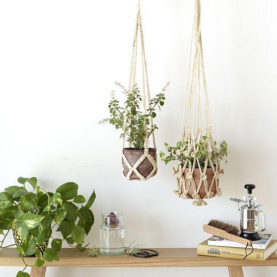 壁 天井 観葉植物を室内で吊るす方法と飾り方 ひとはなノート