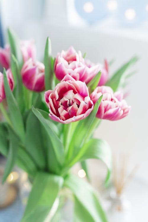 Tulipani Che Passione Charme And More Tulipani Foto Di Fiori Tulipani Rosa