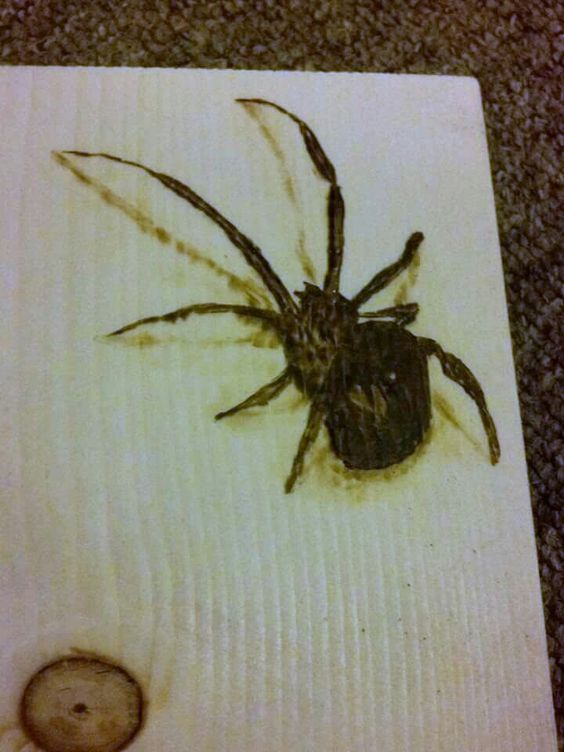 3D spider.  pyrography (wood burning)