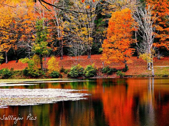 Photo by Salliejw Pics, taken at the peak of fall at Bass Lake in Moses H. Cone Memorial Park.