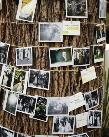 wrap twine or ribbon around a tree and clip photos on it!