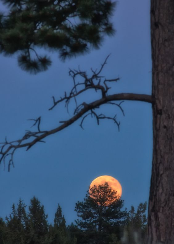 According to The Farmer's Almanac, the full moon in July is known as the Full Buck Moon.
