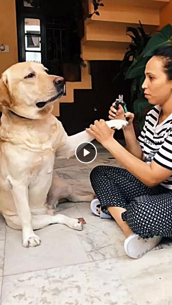 Cachorro não aceita que corte sua unhas
