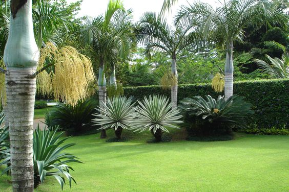 Jardim tropical com Agaves e Palmeiras.