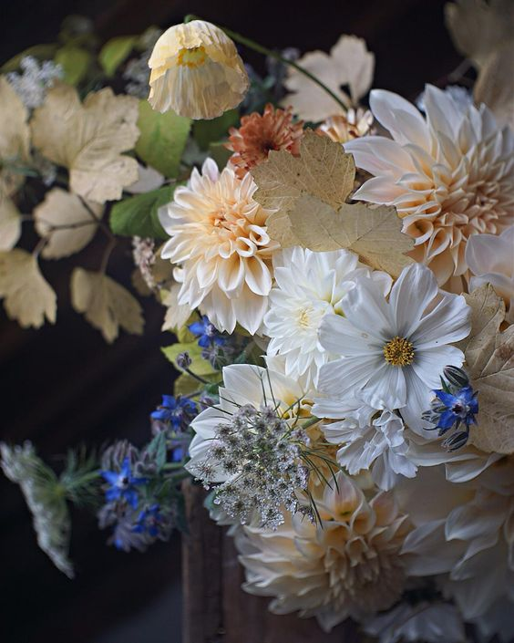 "Cosmos, dahlias, icelandic poppies, borage (?), fall foliage, and calendula. Cream with hints of blue. Fleuropean on Instagram. ""A soft autumnal embrace straight from Mother Nature..."":"